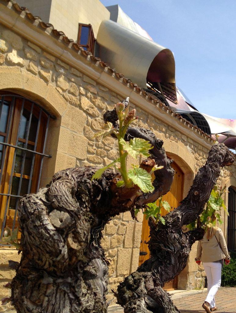 Marques de Riscal Elciego La Rioja