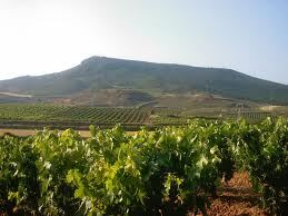 Tom Perry Rioja Spain wine region