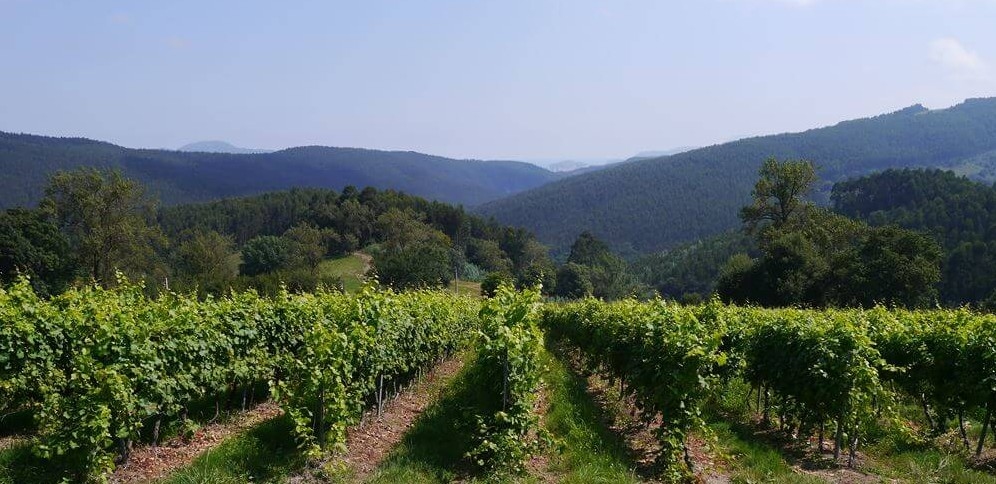 Winery visit at the Vidular Bodega in the Costa de Cantabria
