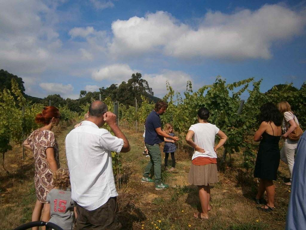 Bodegas Vidular winery visit Costa de Cantabria