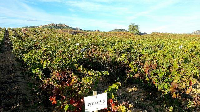 La Rioja winery Roda Haro