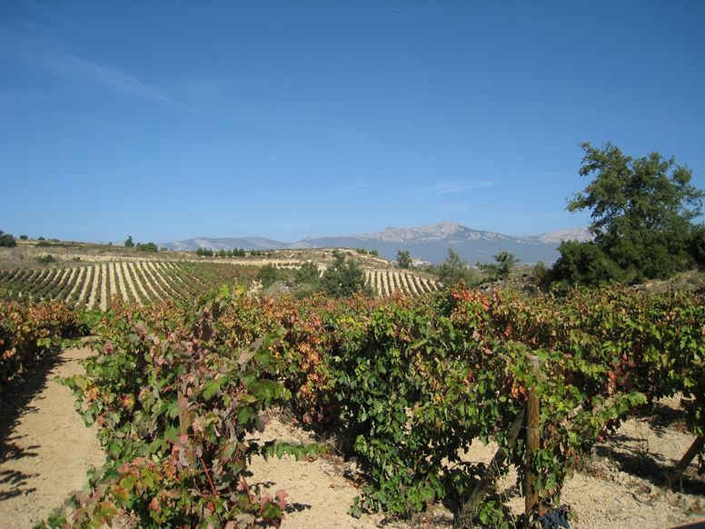 winery bodega vineyard vinedos premio penin parker points Spain tour best wineries in spain