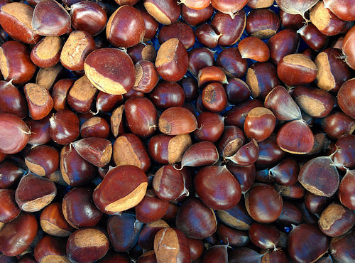 castano chestnut roasted