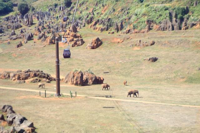 park animals Cantabria reserve telecabina