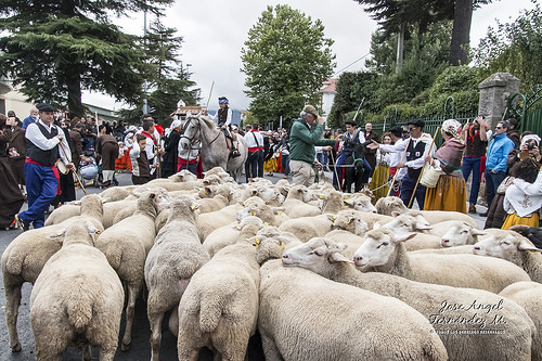sheep agriculture Reinosa festival September Fall