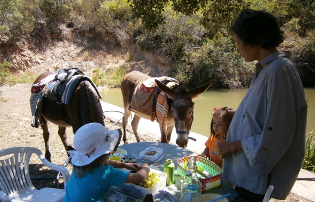 donkeys trekking horses family children Alentejo Portugal
