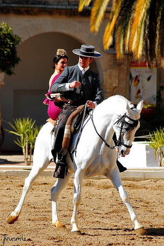 must-sees in Andalusia horses