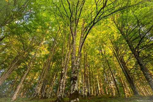 forest bathing in Spain